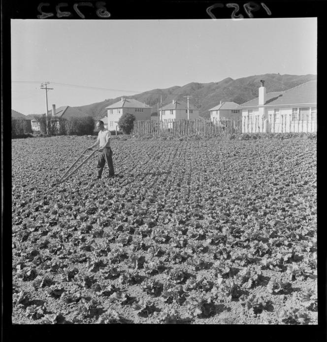 1957 market garden